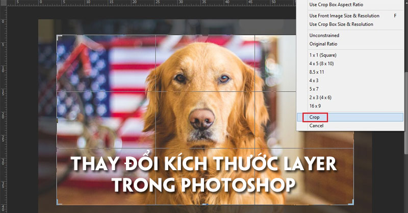 cach-thay-doi-kich-thuoc-layer-trong-photoshop